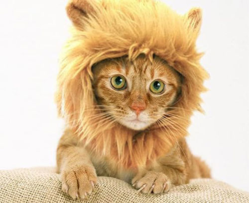 Creative-Halloween-Costumes-For-Pets-2020-12