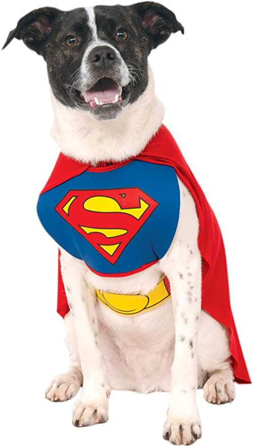 Creative-Halloween-Costumes-For-Pets-2020-3