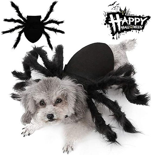 Creative-Halloween-Costumes-For-Pets-2020-6