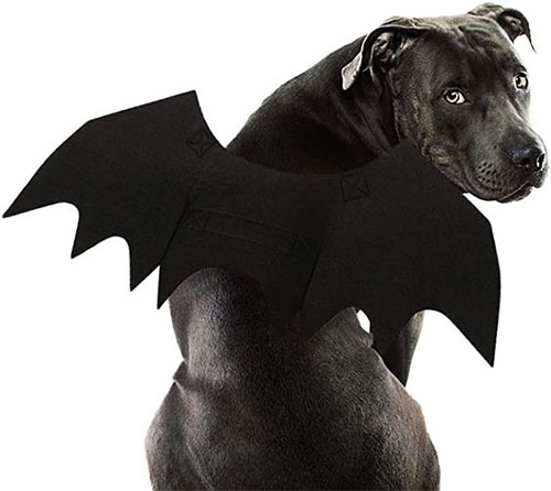 Creative-Halloween-Costumes-For-Pets-2020-8