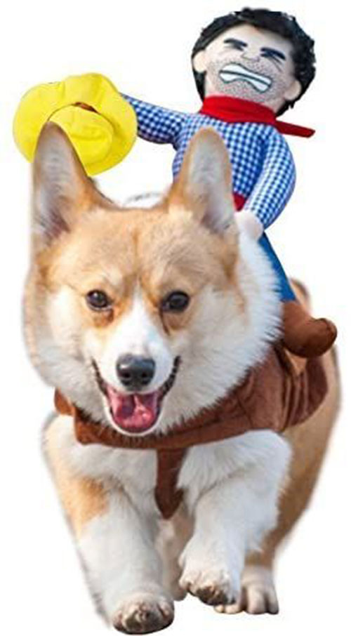 Funniest-Halloween-Costumes-Ideas-For-Pets-2021-1