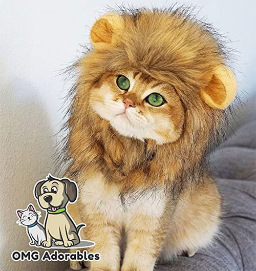 Funniest-Halloween-Costumes-Ideas-For-Pets-2021-11