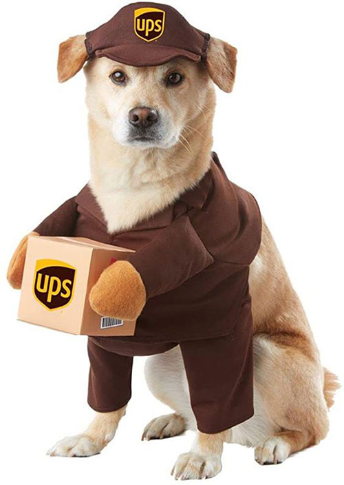 Funniest-Halloween-Costumes-Ideas-For-Pets-2021-4