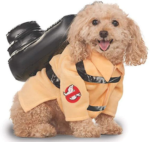 Funniest-Halloween-Costumes-Ideas-For-Pets-2021-5