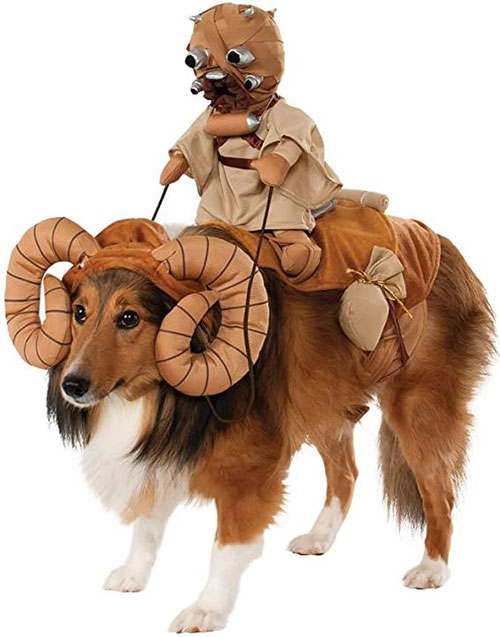 Funniest-Halloween-Costumes-Ideas-For-Pets-2021-7