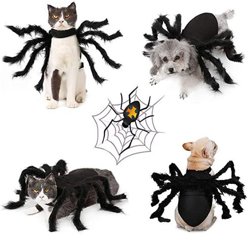 Funniest-Halloween-Costumes-Ideas-For-Pets-2021-8